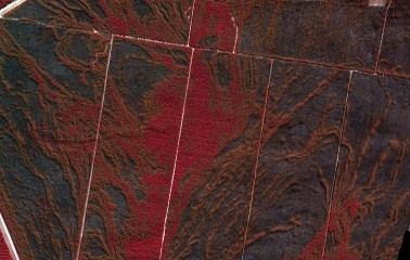 Forest After Fire, Australia - 4 Band Orthophoto, 10,000 ft, 10 cm GSD